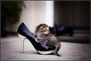 Как избавиться от запаха кошачьей