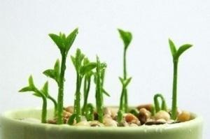 Как посадить и вырастить грейпфрут из косточки в домашних 70