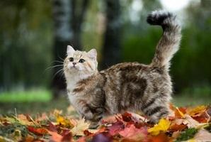 Сбить кота приметы