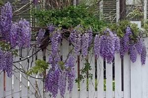 фото цветов для посадки на могилу