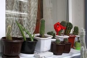 В какую землю кактусы сажать в 386