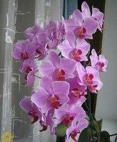 Если отцвела орхидея что делать с цветком