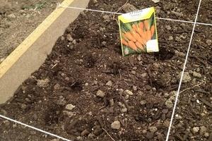 Когда сажать морковь в крыму 44